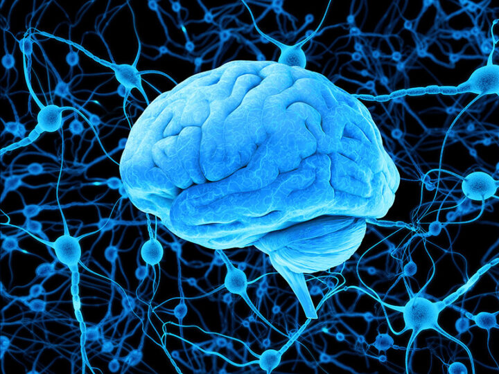Τι είναι η πρωτείνη magneto που ελέγχει εξ Αποστάσεως τον Εγκέφαλο και τη Συμπεριφορά